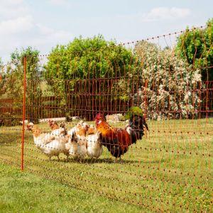 Filet à poules simple pointe orange 50m PoultryNet vue d'ensemble