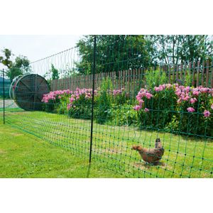 Filet-poules-50m-double-pointe-PoultryNet