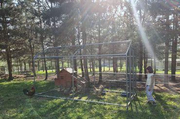 4 conseils pour protéger ses poules de la chaleur