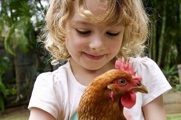 Des poules pour occuper mes enfants