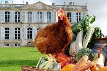 Tout nouveau tout Bio : découvrez les aliments Paulette la Poule Libre
