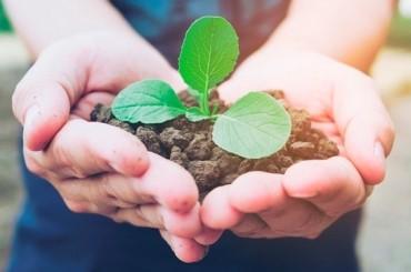Tendance écolo : nos accessoires se mettent au vert pour un poulailler 100% écologique !