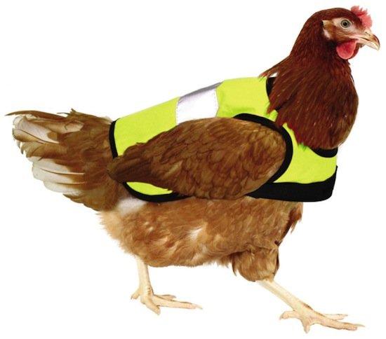 gilet sécurité routière pour poule