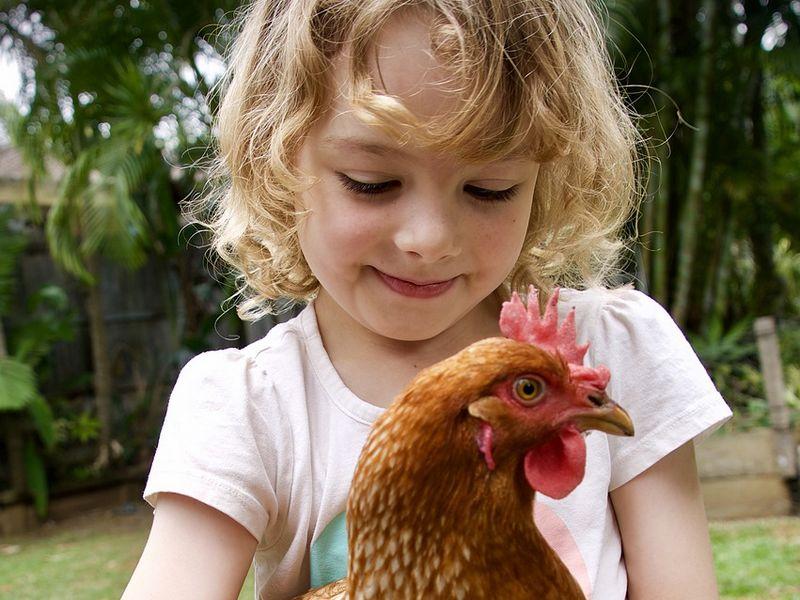 Adopter des poules pour ses enfants
