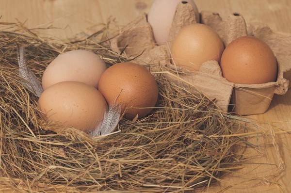 Oeufs de poule dans nid de paille