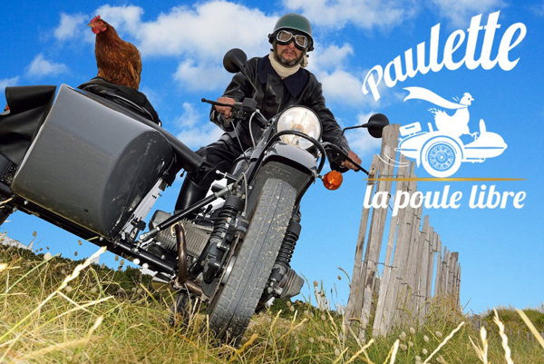 Paulette la poule libérée s'enfuit