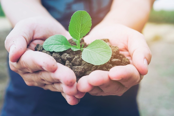 Plante qui pousse dans les mains