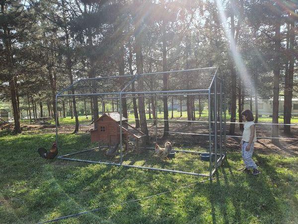 parcours extérieur de vos poules